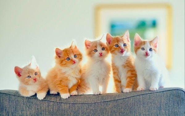 Con Mèo số mấy ? Mơ Thấy Mèo đánh con gì ? Là điềm gì ?